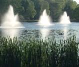 Kalamazoo campus swan pond