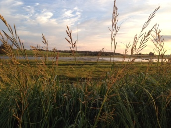 Atlantic salt marsh